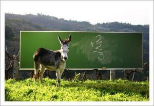 burro-escola-0