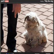 cachorro-enrolado1